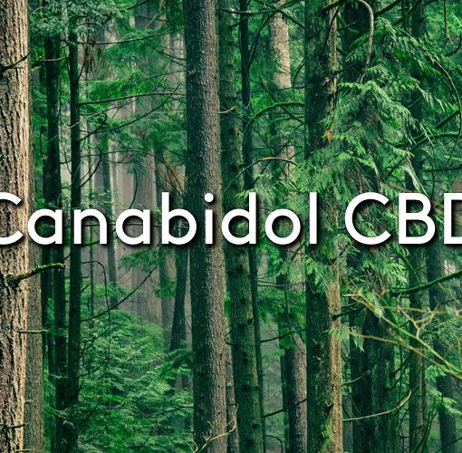 A built up forest with the title: Canabidol CBD