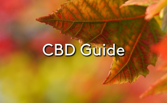 An autumn leaf on a tree with the title: CBD Guide